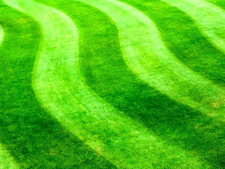 Красивый фигурный газон