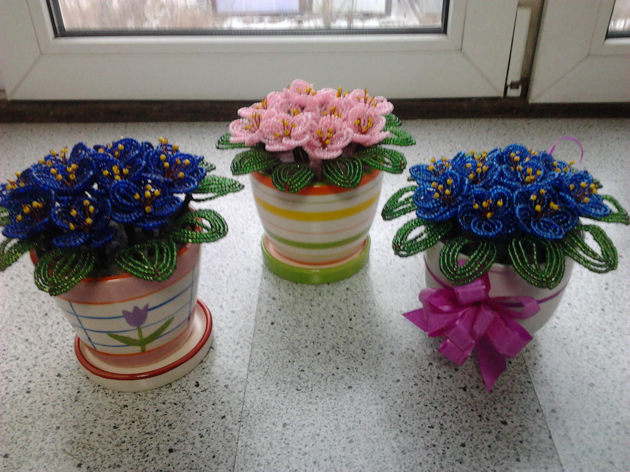 Как подобрать горшки для фиалок, чтобы посадить цветы правильно? 68