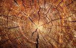 Твердость дерева (различных пород) по Бринеллю