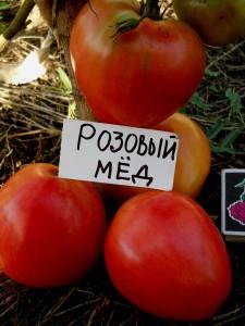 tomat-rozovyj-med-16