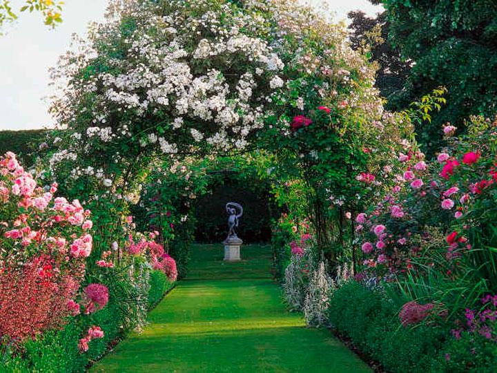 Чудесный розовый сад