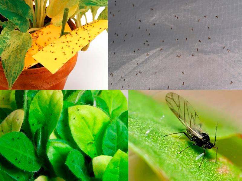 Мошки на растениях