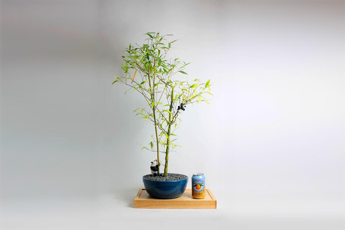 товар недели дерево бонсай2