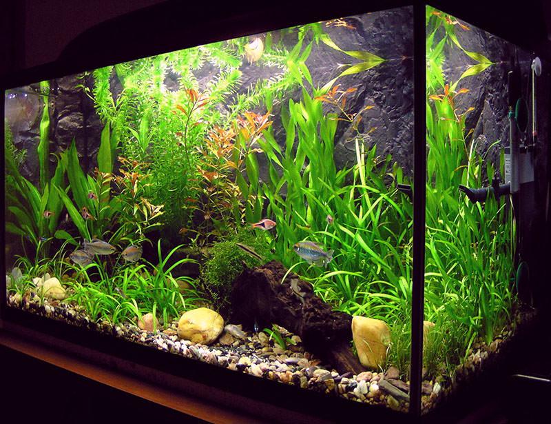 Красивый аквариумный дизайн