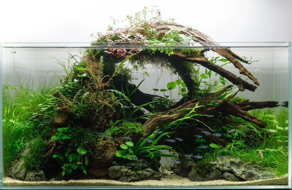 Коряги в аквариуме