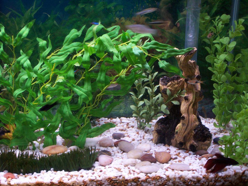 Композиция в аквариуме