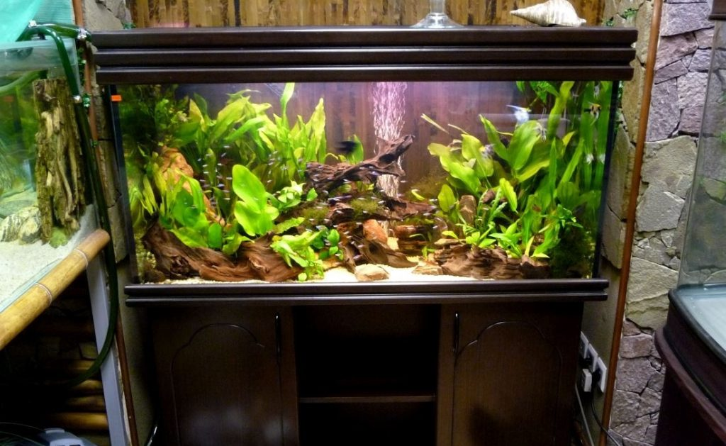 Композиция для аквариум в голландском стиле